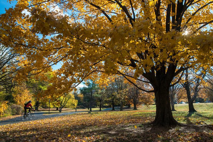 Anticipating Fall, Visit Alexandria Releases Details for Local Events Into November