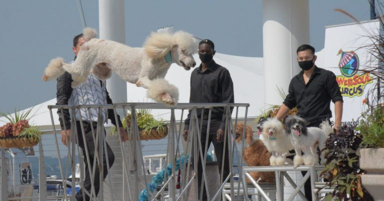 Pompeyo Family Dogs Perform at National Harbor for National Dog Day