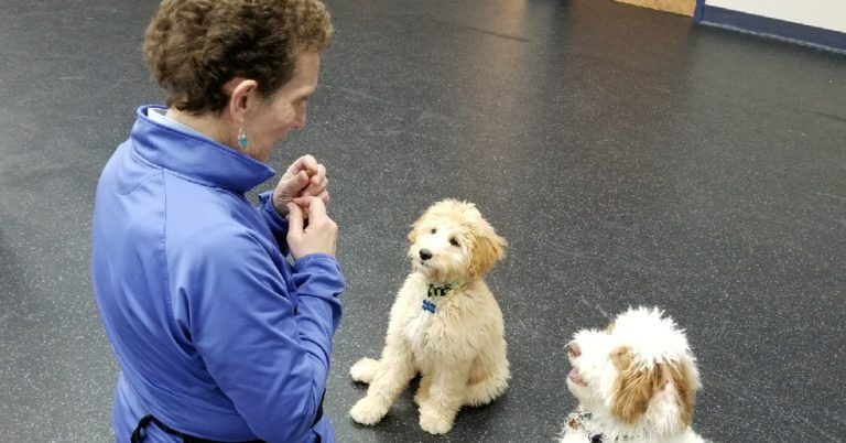 Back to School Training Tips for Your Furry Friends
