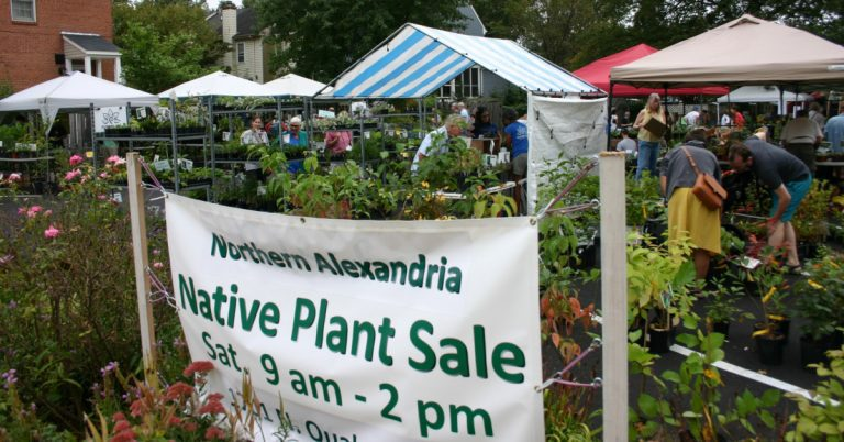 It's the Northern Alexandria Native Plant Sale on Saturday, October 2!