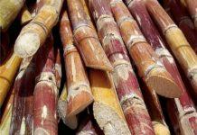 Sugarcane-price