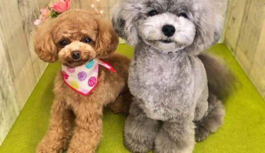 犬友って必要?犬友のメリット3つと犬友作りに便利なアプリ紹介