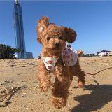 犬と行ける福岡の公園スポット