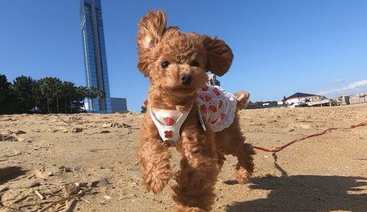 福岡公園スポット|犬と楽しむ福岡のお散歩・公園7選を犬目線で紹介