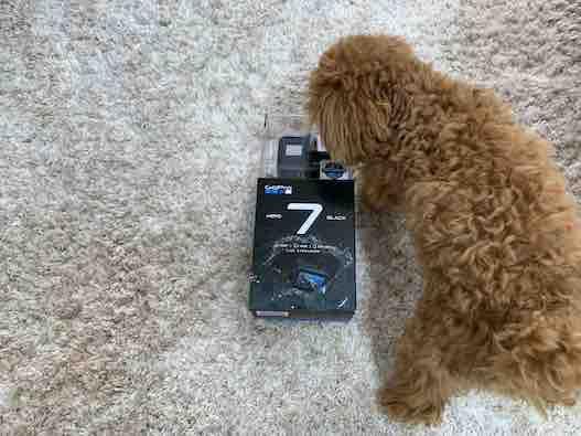 GoProの匂いを嗅ぐ愛犬