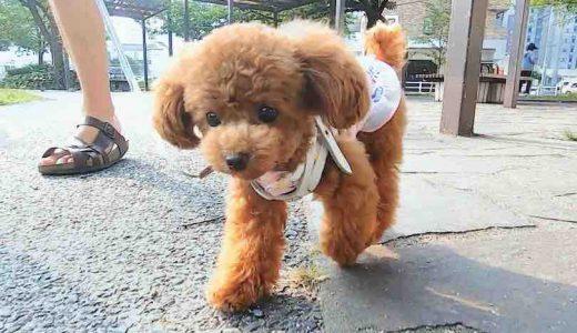 散歩グッズ|犬とのお散歩に欠かせないおすすめの持ち物7選