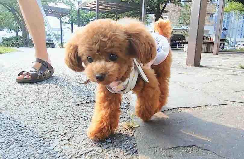 おすすめの犬の散歩グッズまとめ