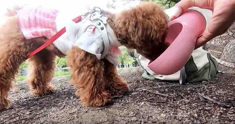 犬の散歩グッズ:ペットウォーターボトル