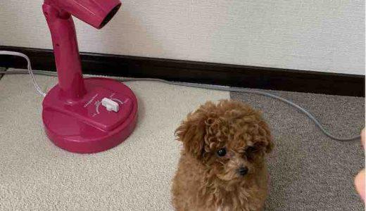 お手入れラクラク|飼い主のストレスを無くすおすすめ犬用ドライヤー