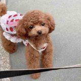 犬服のメリットと注意点