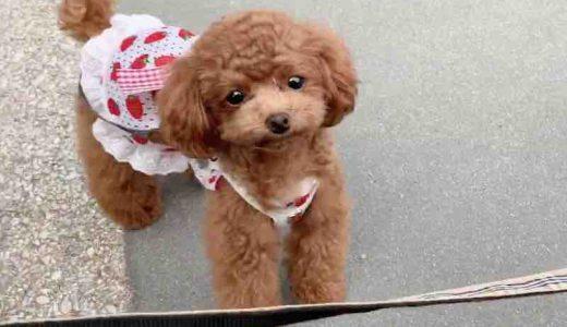 犬が服を着る意味とは?|犬服のメリットと注意点について