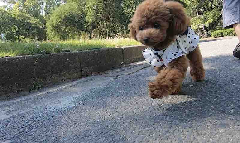 犬の散歩で運動不足の解消、肥満対策
