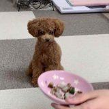 アジの自炊レシピを食べる犬