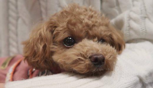 ペット同伴OKの居酒屋「博多やきもん」で看板犬に癒された