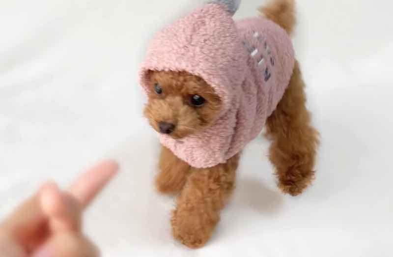 犬服の被毛保護効果
