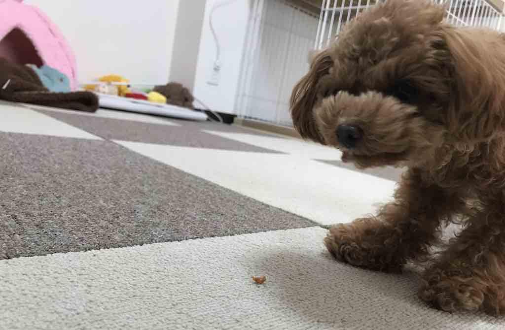 ホースビッツを食べる犬