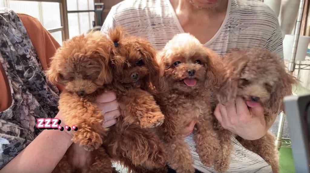 ブリーダー犬舎に集まる犬たち