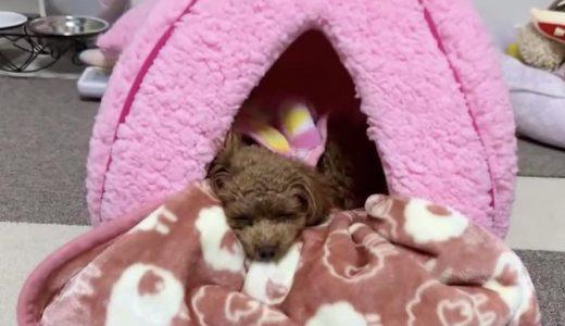 犬の防寒対策に購入したペットハウスの効果・使い勝手について