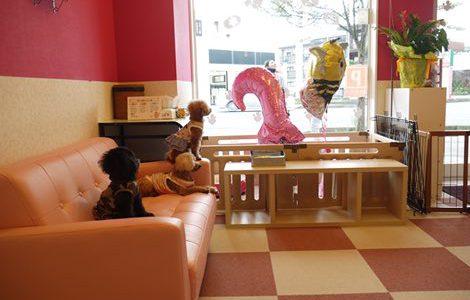 福岡の犬カフェCOCOHOUSE(ココハウス)