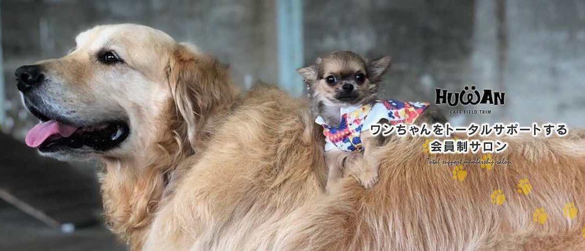福岡の犬カフェ HUWAN(ヒューワン)