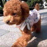 犬目線で歩く愛犬コロン