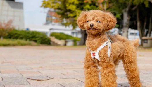 【2021年最新版】福岡の犬カフェ人気店おすすめ9選【福岡市〜北九州】