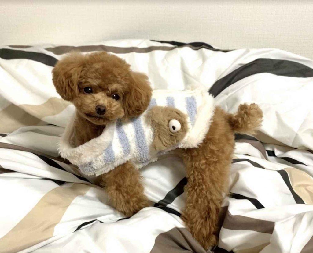 身体に合う洋服のサイズが少ない犬