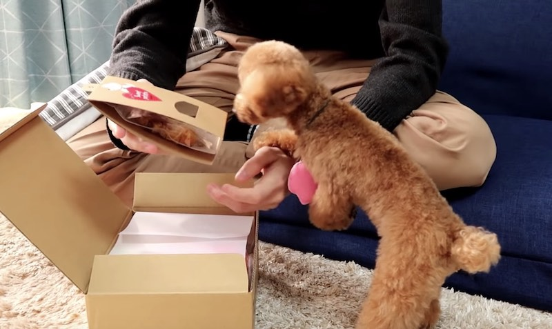 doggybox-review