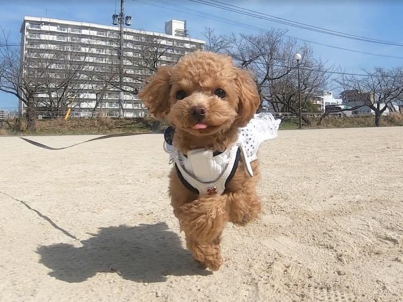 toydog-1