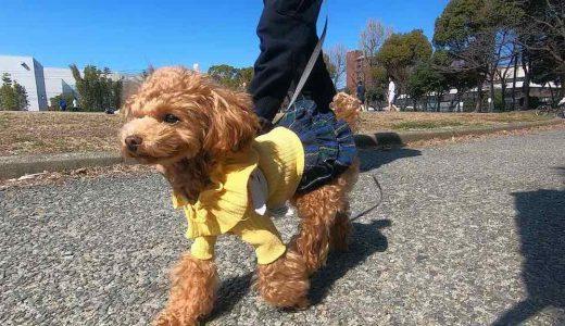 愛用している犬のノミ・マダニ対策グッズとその効果について