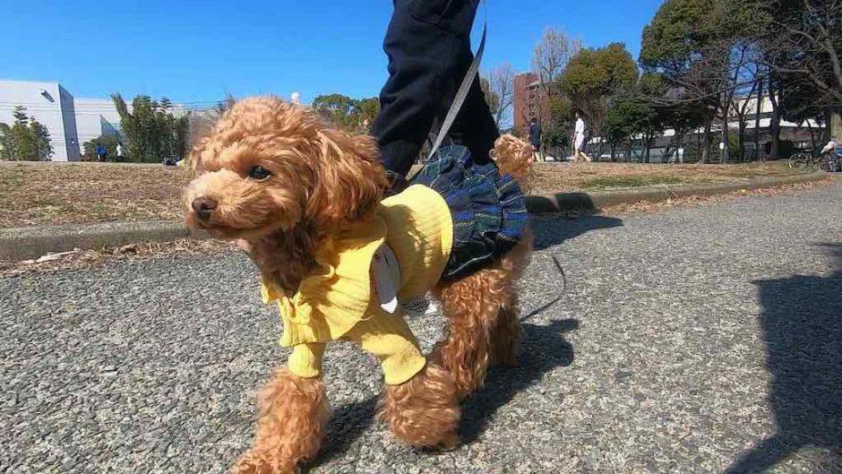 愛用している犬の虫除けグッズとその効果