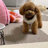 おすすめの犬のフローリングマットと選び方の基準