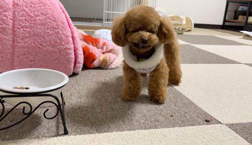 【必見】フローリングマットは必要?生活してわかった室内犬向けマット選びの基準6つ