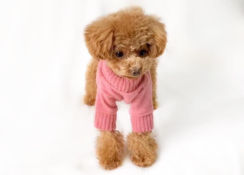 プレシャスファミリーの犬服