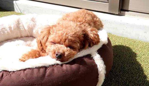 愛犬お気に入り犬用ベッドの使い心地について