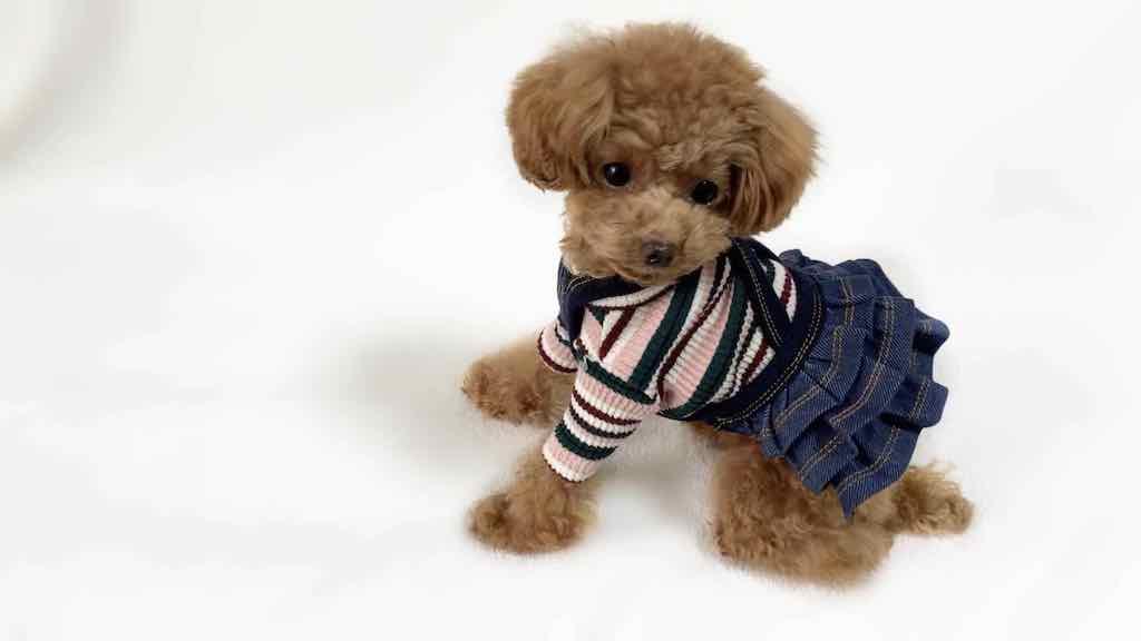 かわいい犬服の購入先