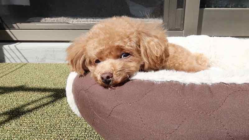 犬のベッドとその値段