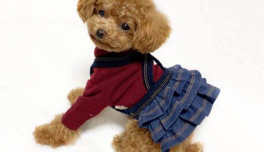 小型犬サイズの可愛い服が買えるサイト|プレシャスファミリー