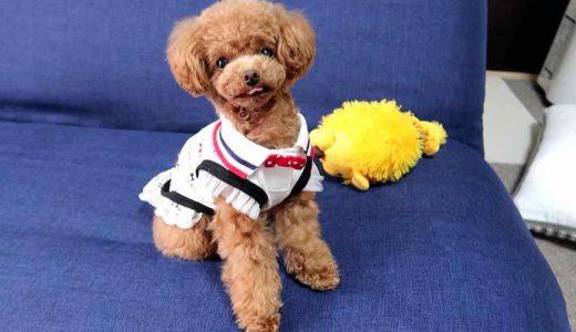 実体験|小型犬が喜んで遊ぶおもちゃ5選とおもちゃの役割について