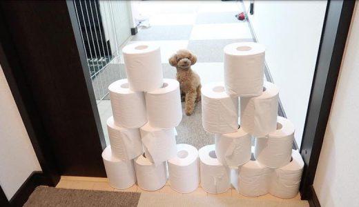トイレットペーパーチャレンジとは?ペット界で話題のおウチ遊びに挑戦