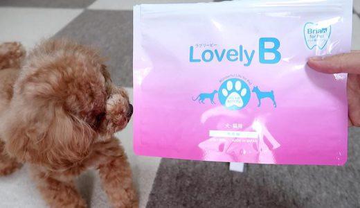 【レビュー】愛犬の口臭予防・対策に使った「ラブリービー」の使用体験