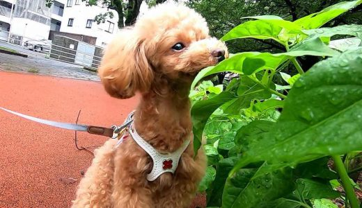 どうして犬は散歩中に匂いを嗅ぐ?それは〇〇〇〇をしているから