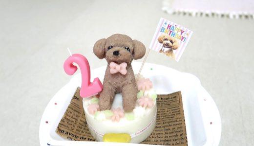 博多やきもんで頼んだ犬の誕生日ケーキのクオリティが高すぎた