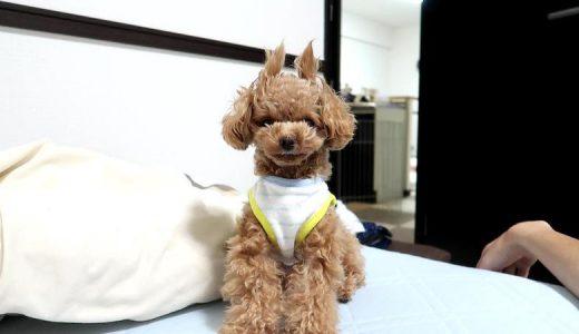 犬の寝床作りは手伝うべき?見守るべき?寝床作りをする理由