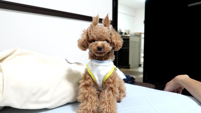 犬が寝床作りする理由