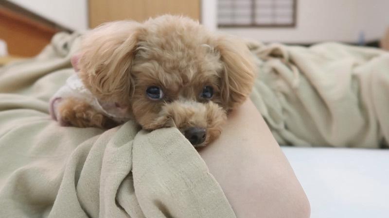ベッドで一緒に寝る犬