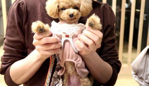 【宿泊体験記】犬と一緒に泊まれる阿蘇の宿「御宿 小笠原」【2020年】