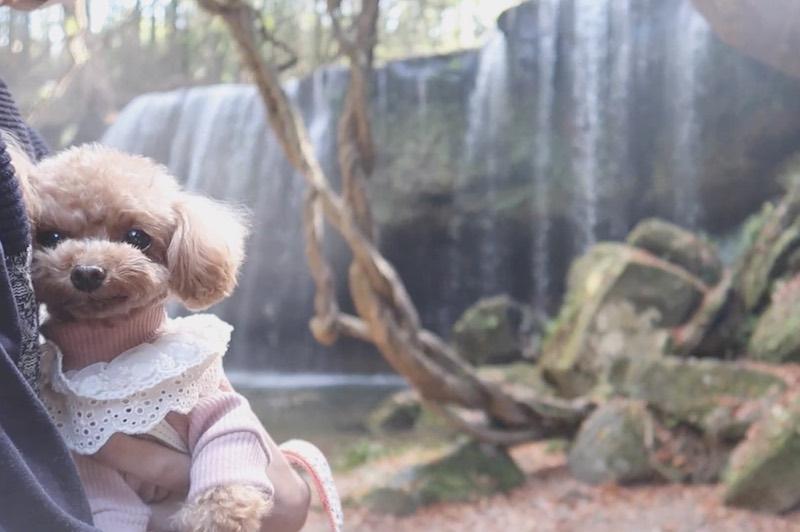 鍋ヶ滝と犬