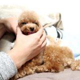 犬の口臭対策のポイント