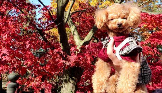 【ペット同伴OK】愛犬と一緒にカドリードミニオンに行く際の注意点
